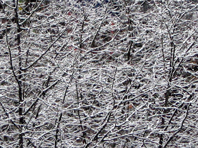 Winter Trees Snow Covered
