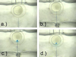 Micro-injection of Zebrafish Embryos
