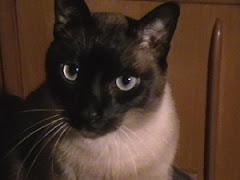 Mi gato Chispa