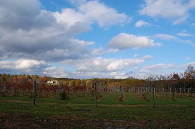 Daniel's Vineyard