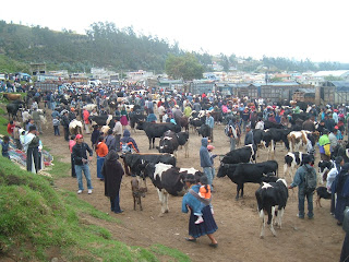 Saturday animal market in Otavalo.