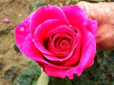 il senio mormora la rosa bella ciao. Black Bedroom Furniture Sets. Home Design Ideas