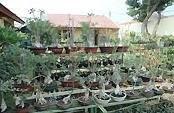 Taman Rumah makan