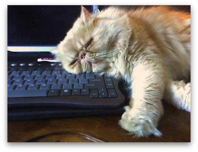 уставший кот на клавиатуре - много работал