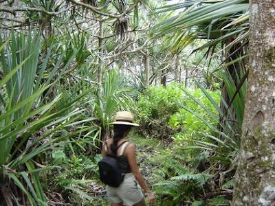 Sentiers de La Reunion - Le long de la côte sud-est