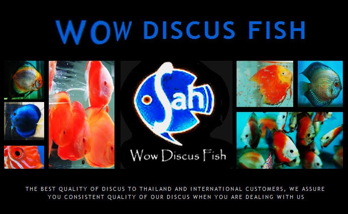 Wow Discus Fish