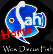 Wow Discus Home
