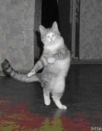 """Il mio carissimo amico """"Gatto ballerino"""""""