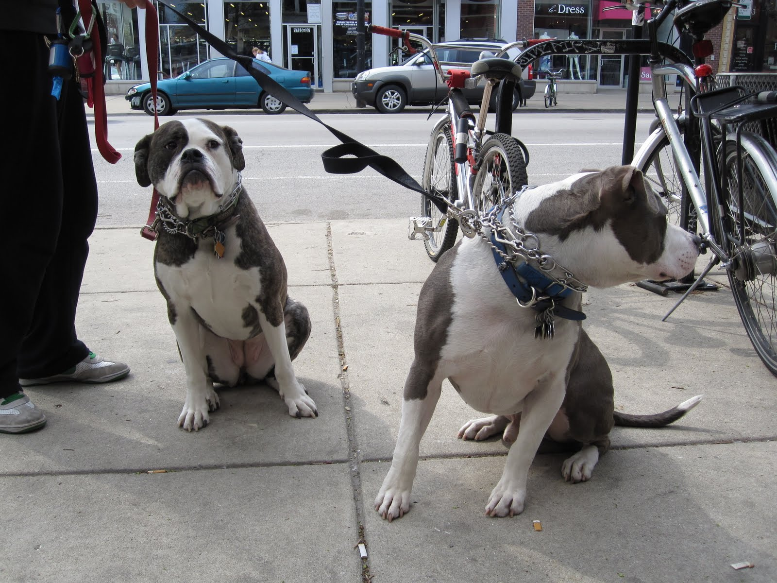 Welles Park Chicago Dogs