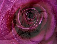 Uma flor