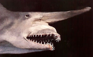 Unicorn Shark