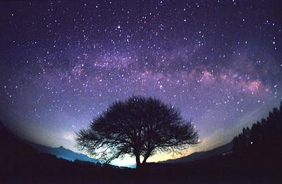 http://2.bp.blogspot.com/_TkKZZyzUvio/SPrS6ywuUsI/AAAAAAAABrQ/p8UupNx-zes/s400/tree+of+life+Starlit_Sky.jpg