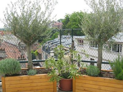 amenagement d 39 exterieur jardinier paysagiste corse paca paris palmiers oliviers lavandes. Black Bedroom Furniture Sets. Home Design Ideas