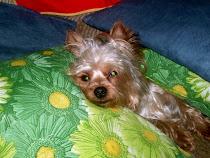"""Lui è """"Bricco""""...l'altro cucciolo della famiglia...è l'inseparabile amico di mia sorella!!!"""