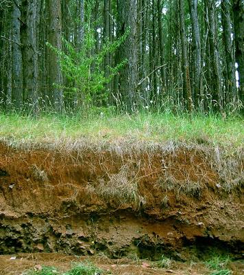 Dawinci soil