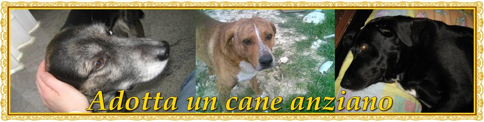 ADOTTA UN CANE ANZIANO
