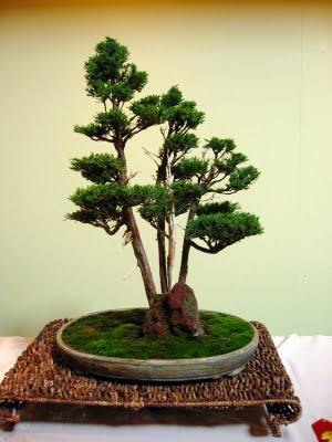 Bonsai Contest Winner