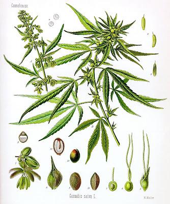cannabis wallpaper. cannabis wallpaper.