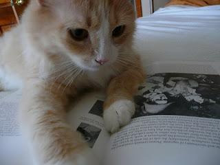 gatito leyendo