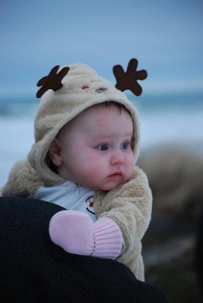 [reindeer]