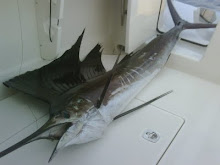 Cal Haupt - Sailfish out the Door