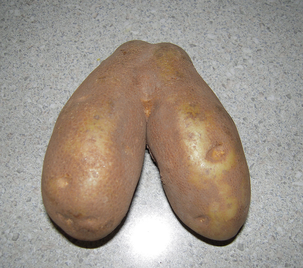 Potato%252BBalls daddy young gay, chubby young