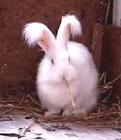 Jenis - Jenis Kelinci