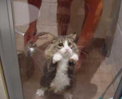 kucing sedih, kucing lucu