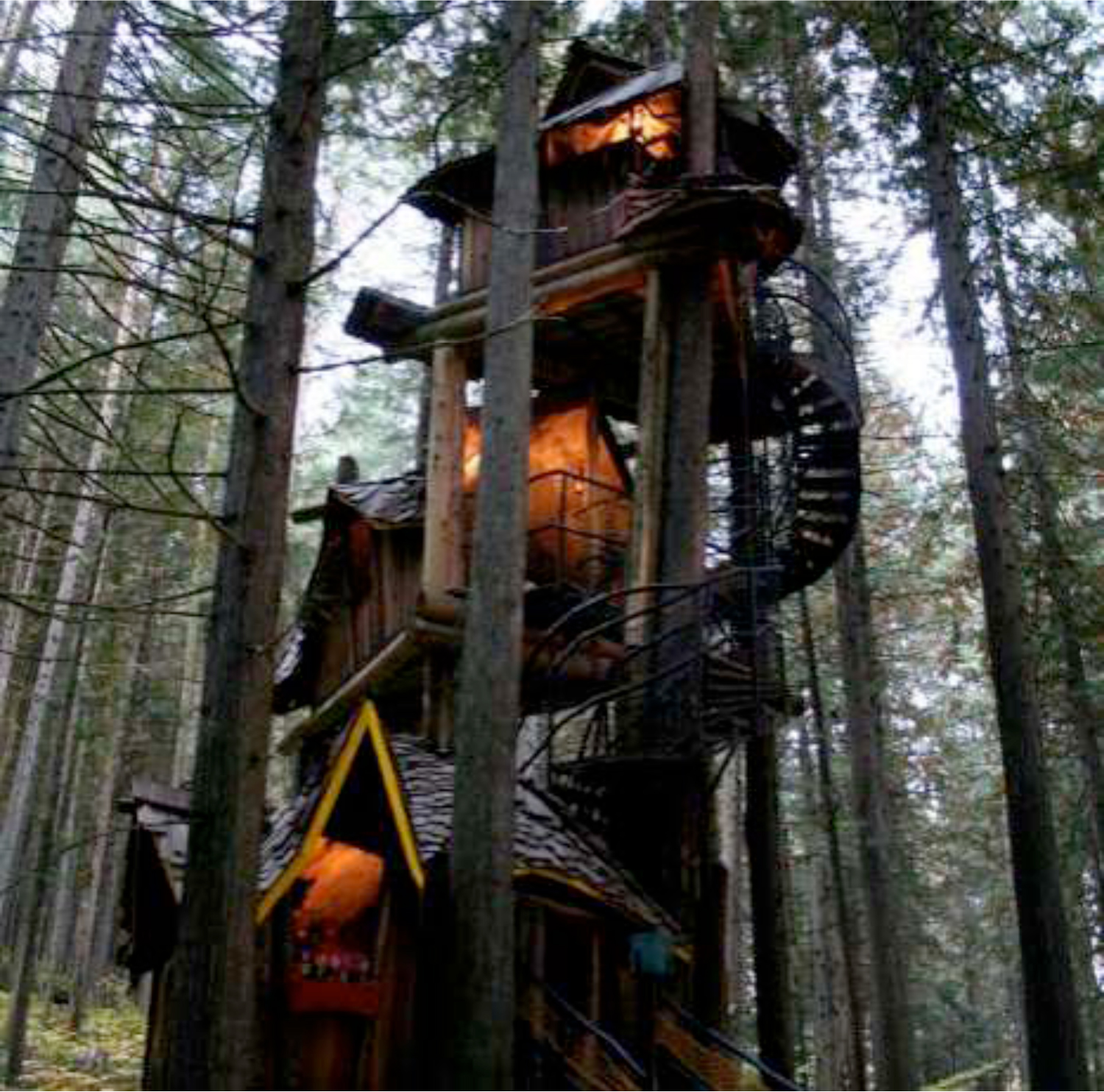 This is what living in a treehouse as an adult is like foto