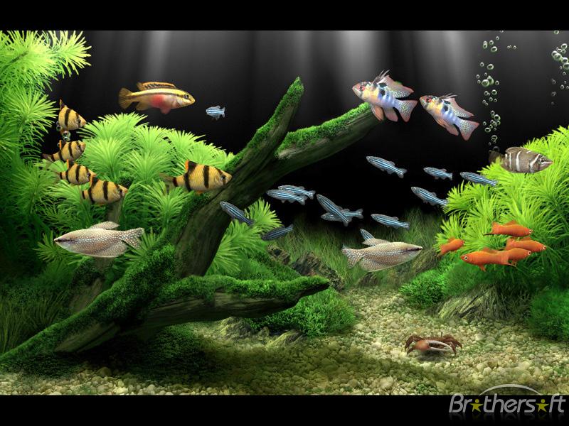 Dream Aquarium Screensaver Screensavers And Wallpaper