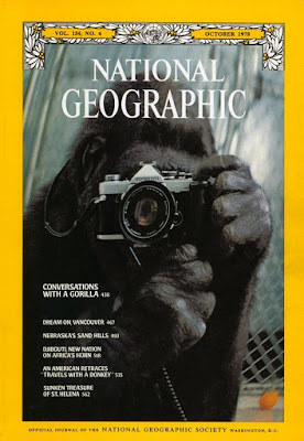 national geographic cover gorilla with camera