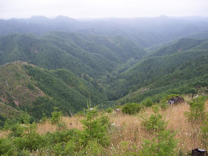 Die Oregon coast range (mein Untersuchungsgebiet)