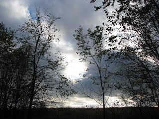 серая осень