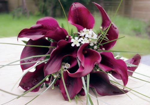 Bouquet Bridal Black Calla Lily Bouquet Pictures