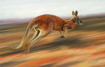 Red Great Red Kangaroo Mammal Picture