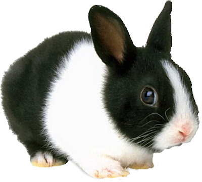 Rabbits Free Desktop Wallpaper