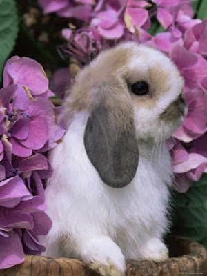 Lovely Rabbit around flowers Photograph