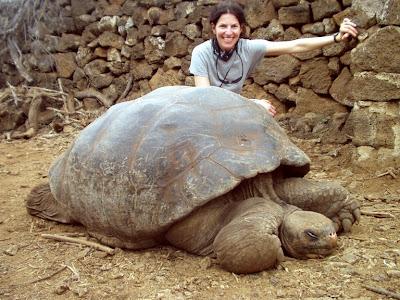 Big Tortoise - Tortoise Picture