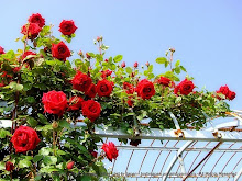 As rosas de Alexandre