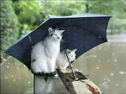 Detras de los cristales...llueve y llueve.