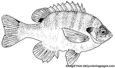 fish-coloring-pages-08