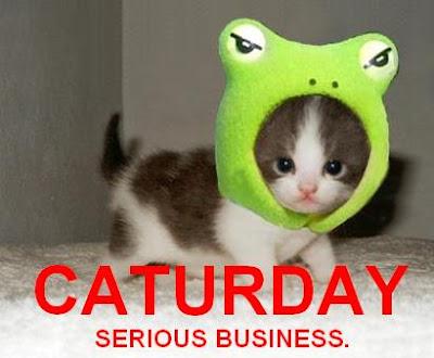 Funny Cats Pics. Funny Cat Custome