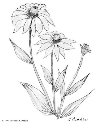 coloring pages of flowers and butterflies. Flowers Life Coloring Pages