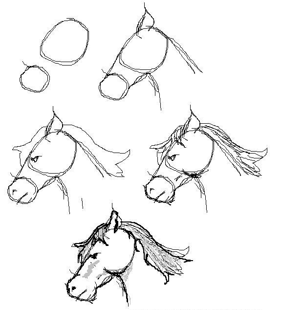 draw horse. Ride a horse gives many
