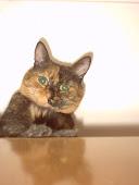Mi gatita belleza