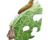 http://tunturuntun-com.blogspot.com.es/2011/03/plagas-y-enfermedades.html