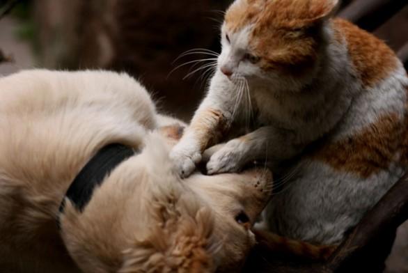 Convivenza Tra Cani E Gatti