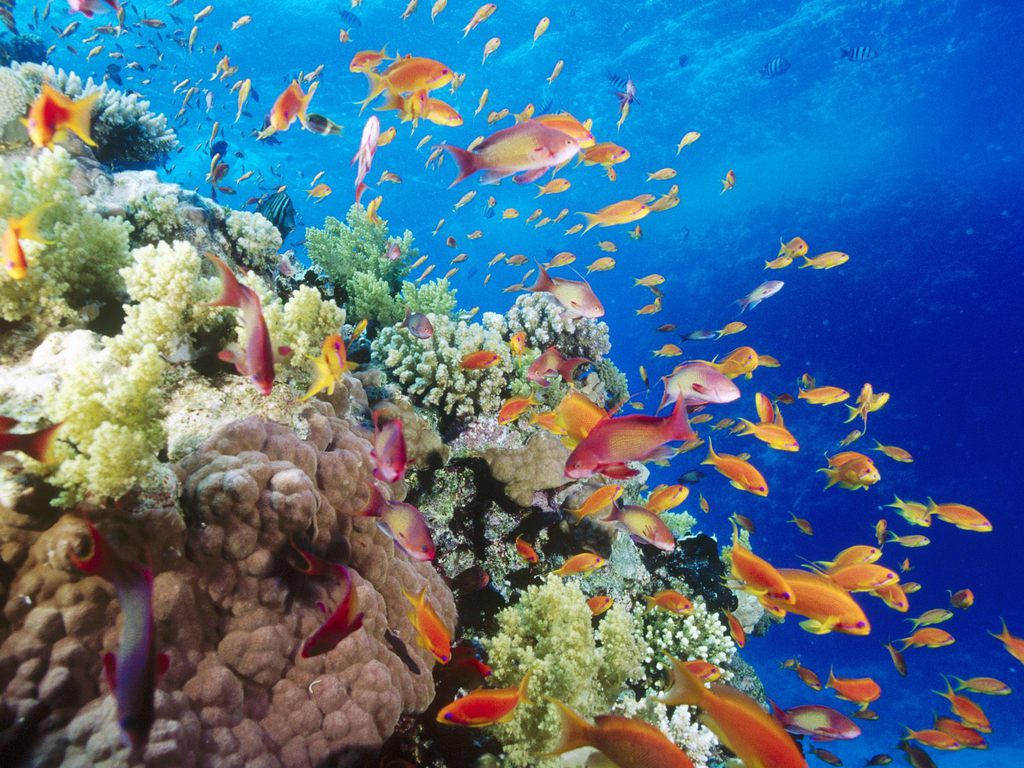 Beautiful Coral Reef Red Sea