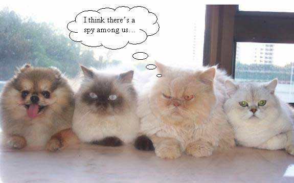 Spy Funny Cats And Dogs Pics