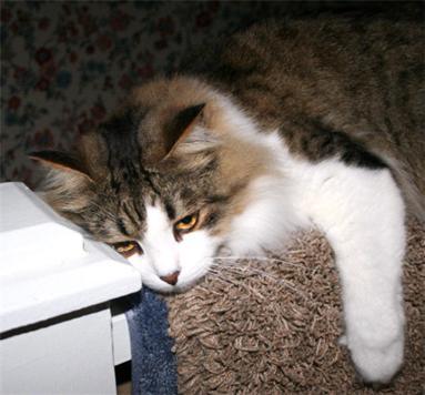[gloomy+cat.jpg]